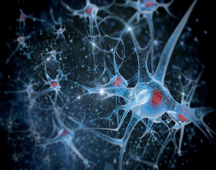 Ejercicios de memoria y Nutricosmética